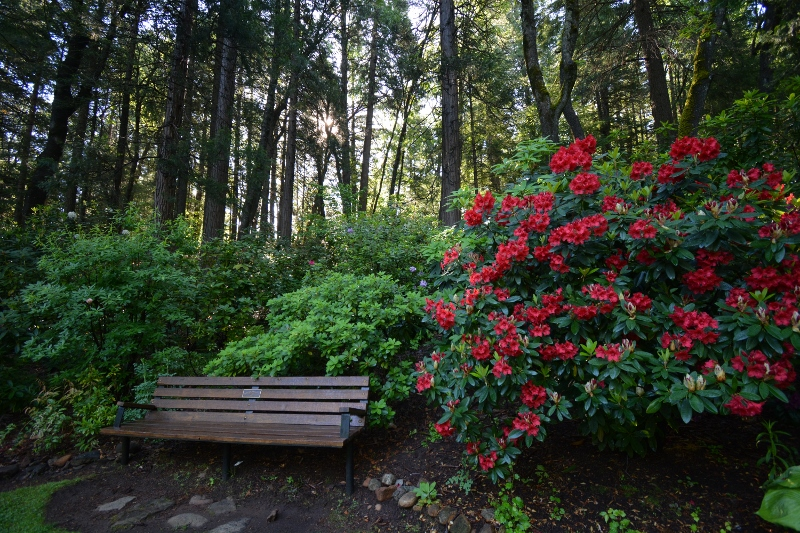 Dunsmuir Botanical Gardens offer a dazzling display of dogwoods, azaleas, and rhododendrons.