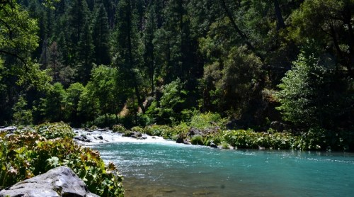One of the crown jewels of Siskiyou County is the world-famous McCloud River.