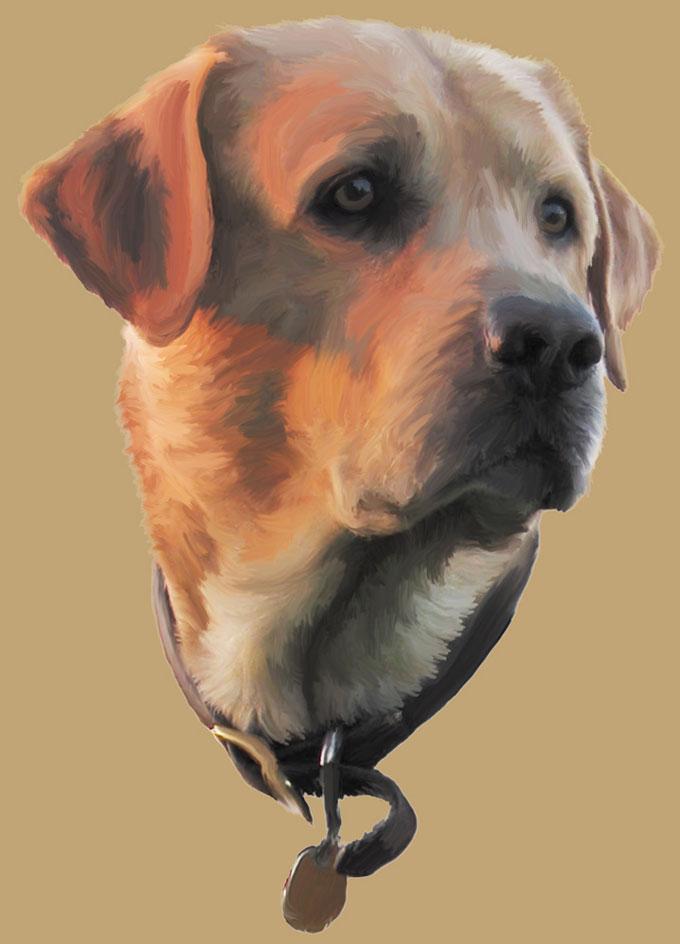 Otis-Labrador Retriever