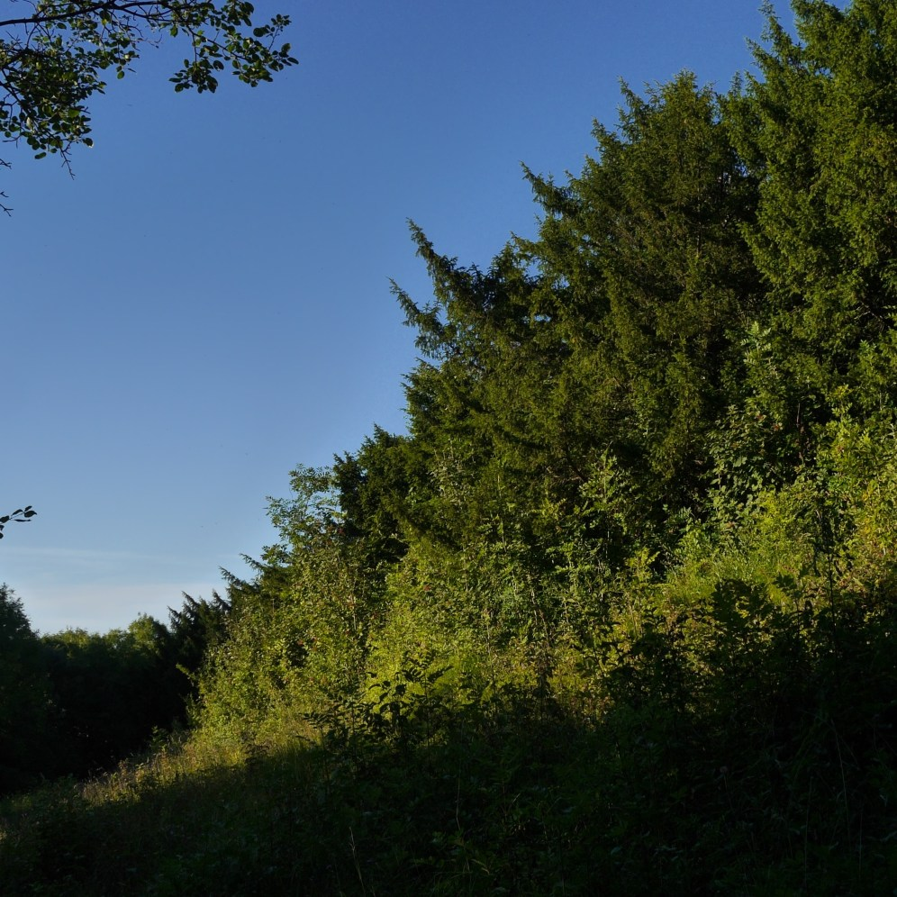 White Hill nature reserve