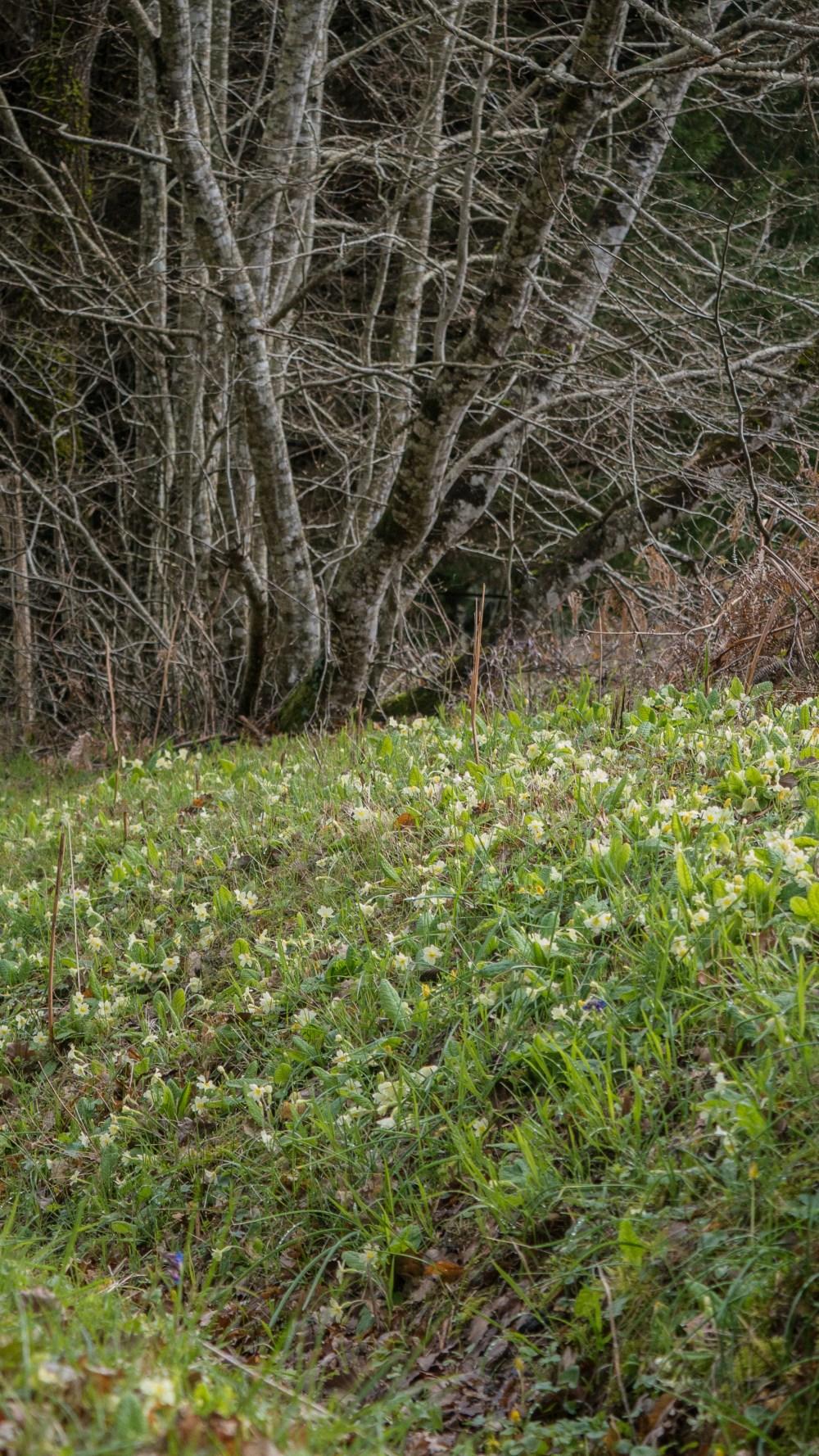 South Charente Spring-16-3