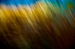 november-pan-blurs_7