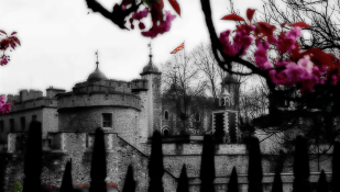 Photo of springtime at the Tower of London. | 15-Apr-00.