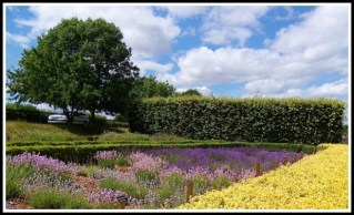 a beautiful sunny day with colourful lavender fields