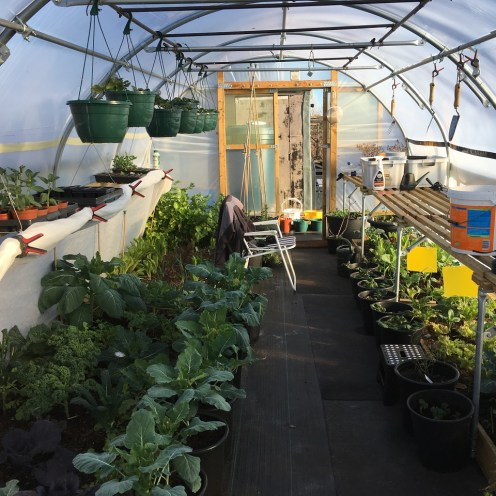 The winter polytunnel