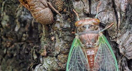 The Birth of a Cicada – VIDEO and PHOTO