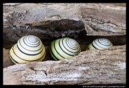 Snails in a queue on Komodo Island