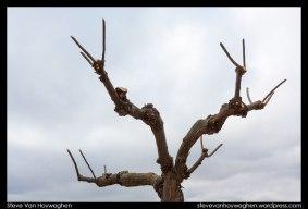 Steve_Van_Hoyweghen-Extremadura-11-2012-04-05-_MG_3269
