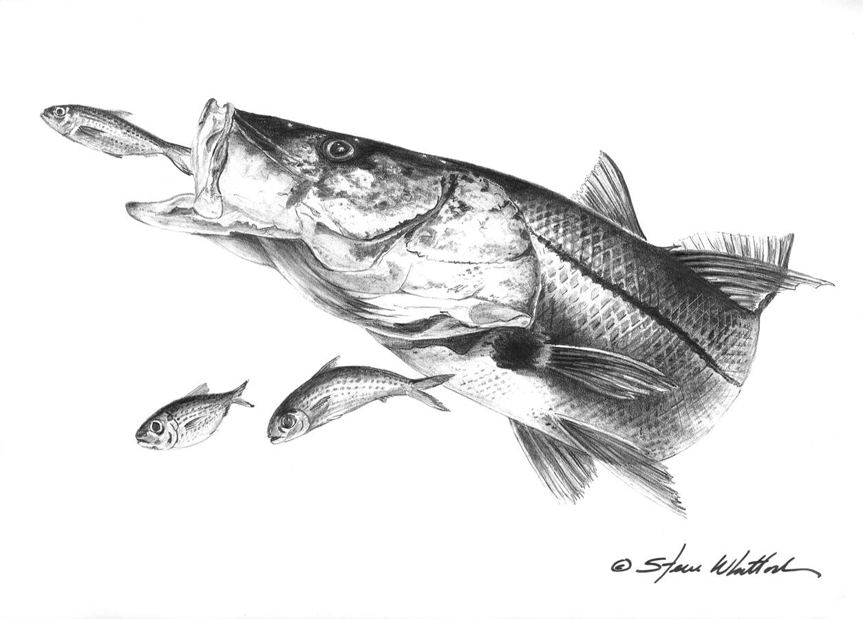 Pencil Art Illustration