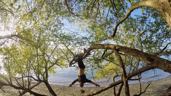 Boy hanging from a tree at Discovery Park, Seattle, Washington