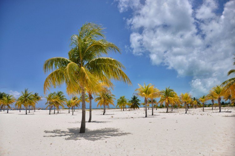 photo of palm trees and white sand beach in cayo largo cuba