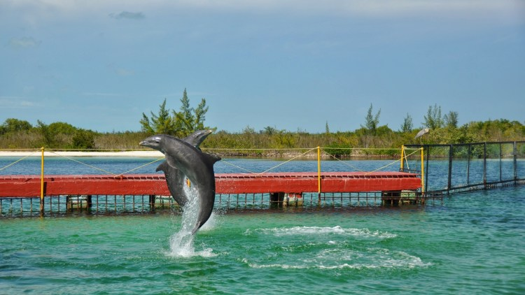photo of dolphins in cayo largo cuba