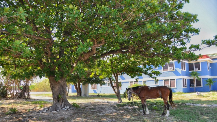 photo of a horse in cayo largo, cuba