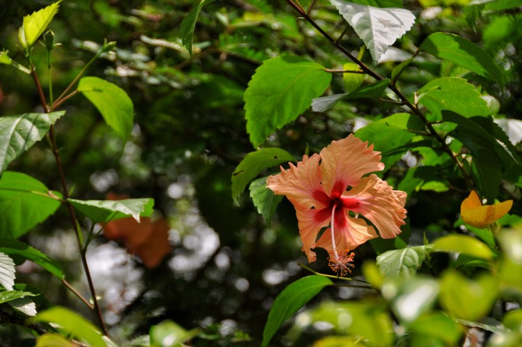 Photo of a flower and butterfly in panama