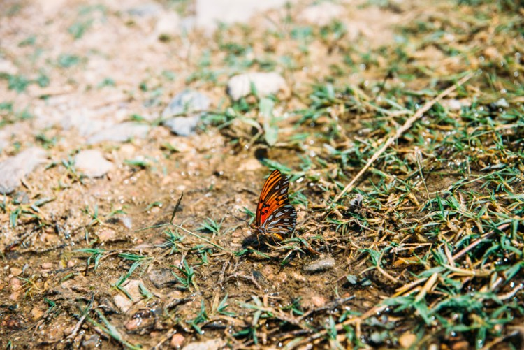 A butterfly at Pedernales Falls State Park outside of Austin Texas