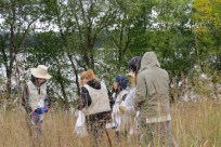 Collecting the seed pods