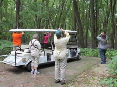 golfcart tours