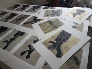 """Prints/Stumps being selected for """"The Tree Portraits I"""""""
