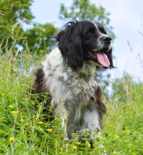 A dog on the Downland