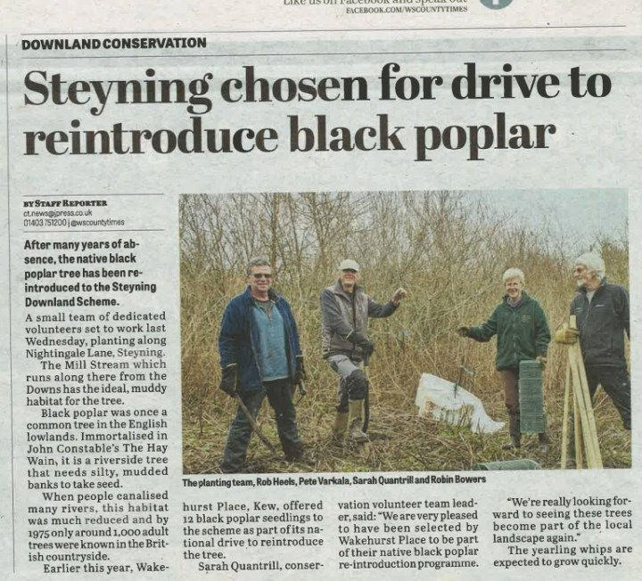 West Sussex County Times 25 02 16 Black Poplar