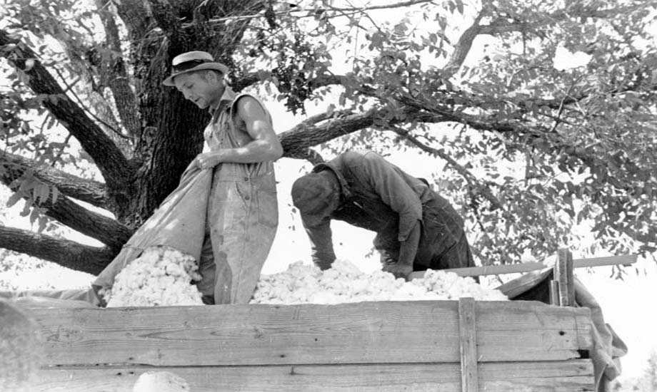 Elvin Lawrence and unnamed man load cotton on a nearly-full wagon.