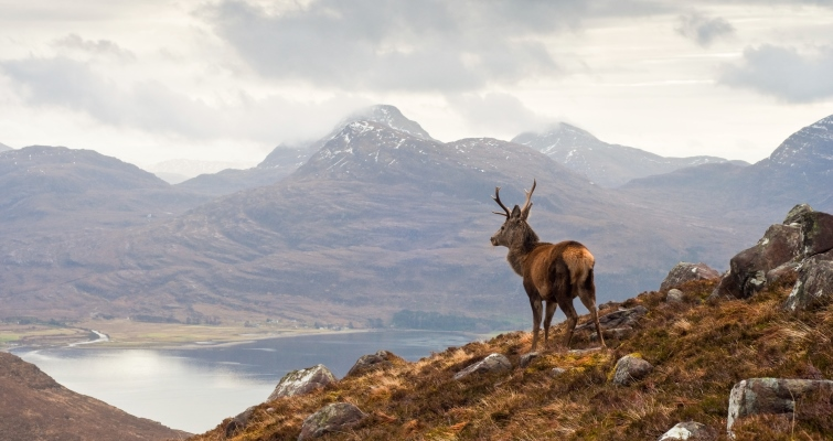 Red deer over the great glen scotland