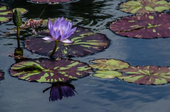 Botanical Garden_Jun 19 2016_0085