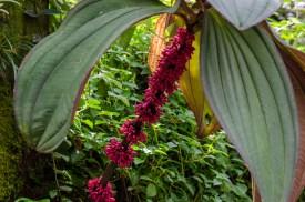 Botanical Garden_Jun 19 2016_0142