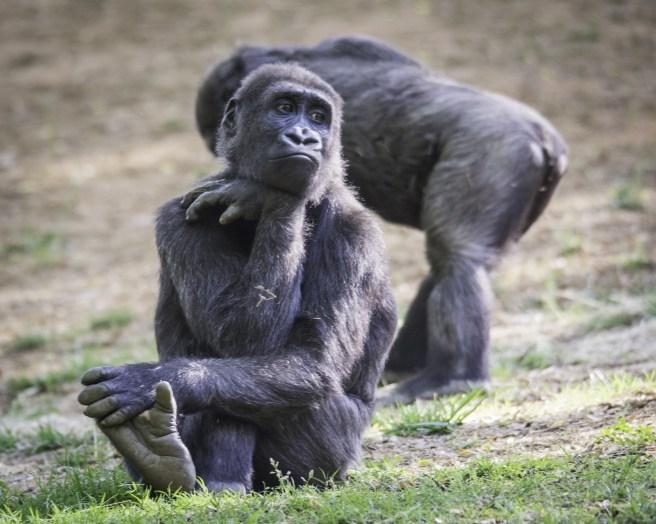 Zoo Atlanta-2807