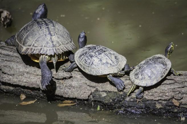 Zoo Atlanta-2888