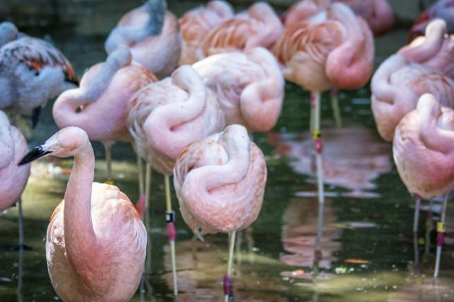 Zoo Atlanta-2961-Edit