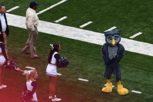Rice Sammy the Owl