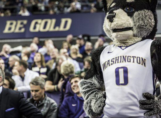 Washington Huskies Harry Mascot