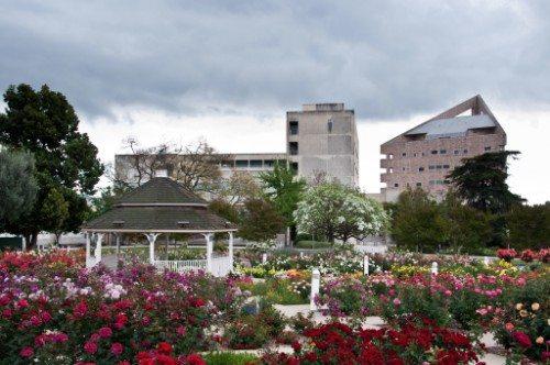 Cal Poly Rose Garden