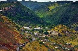 Alarm Forest : St Helena Island