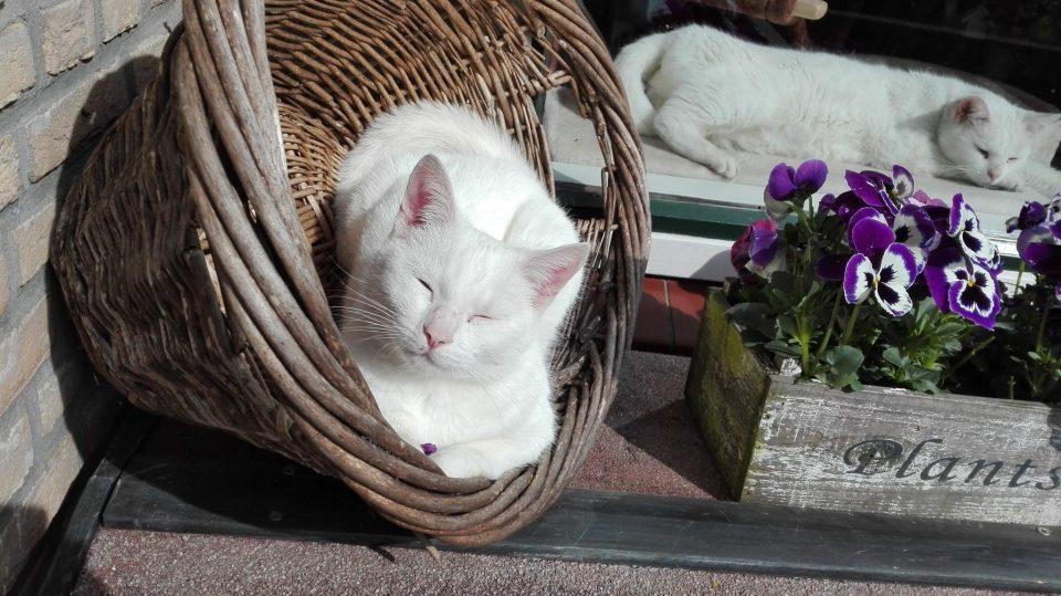 genieten in de maartse zon in die mand, zo lief!