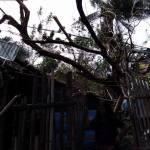 Typhoon Nina 6 stichting Sparrow