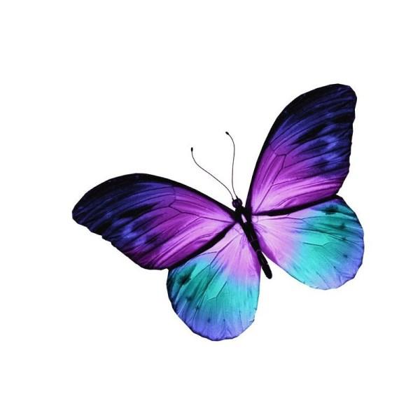 Stickers Papillon Violet Bleu En Vol Etiquette