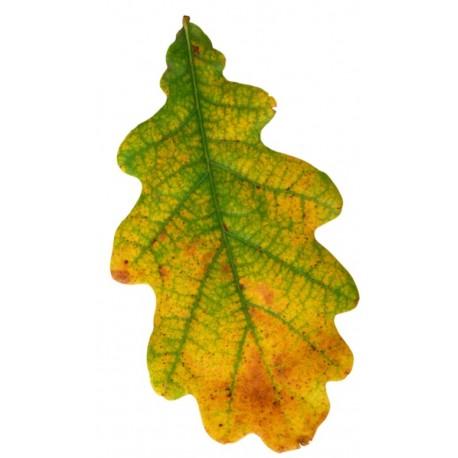 sticker feuille d arbre d arbre chene vert jaune pour votre interieur et exterieur
