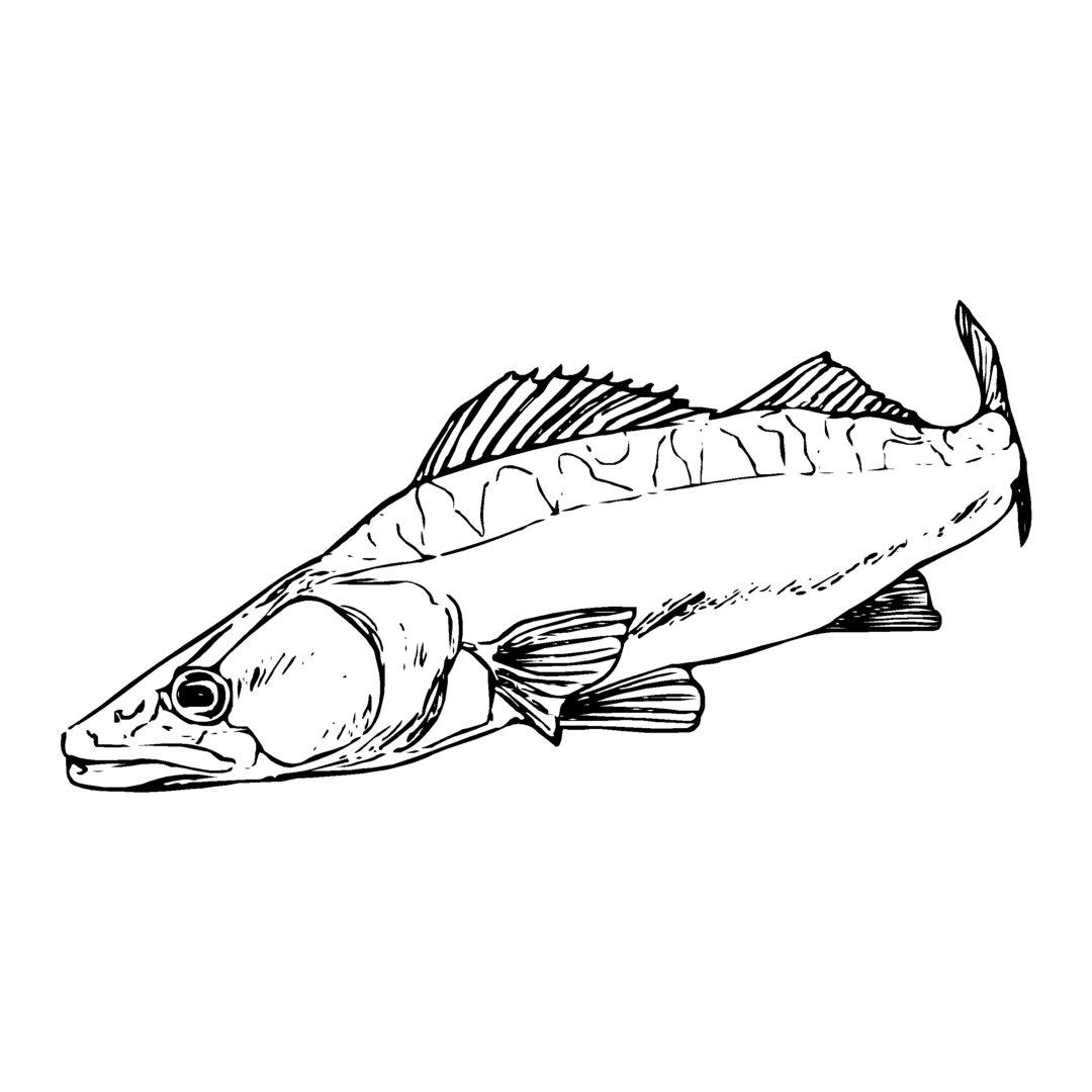 sticker SANDRE ref 29 bateau pêche autocollant poisson doré