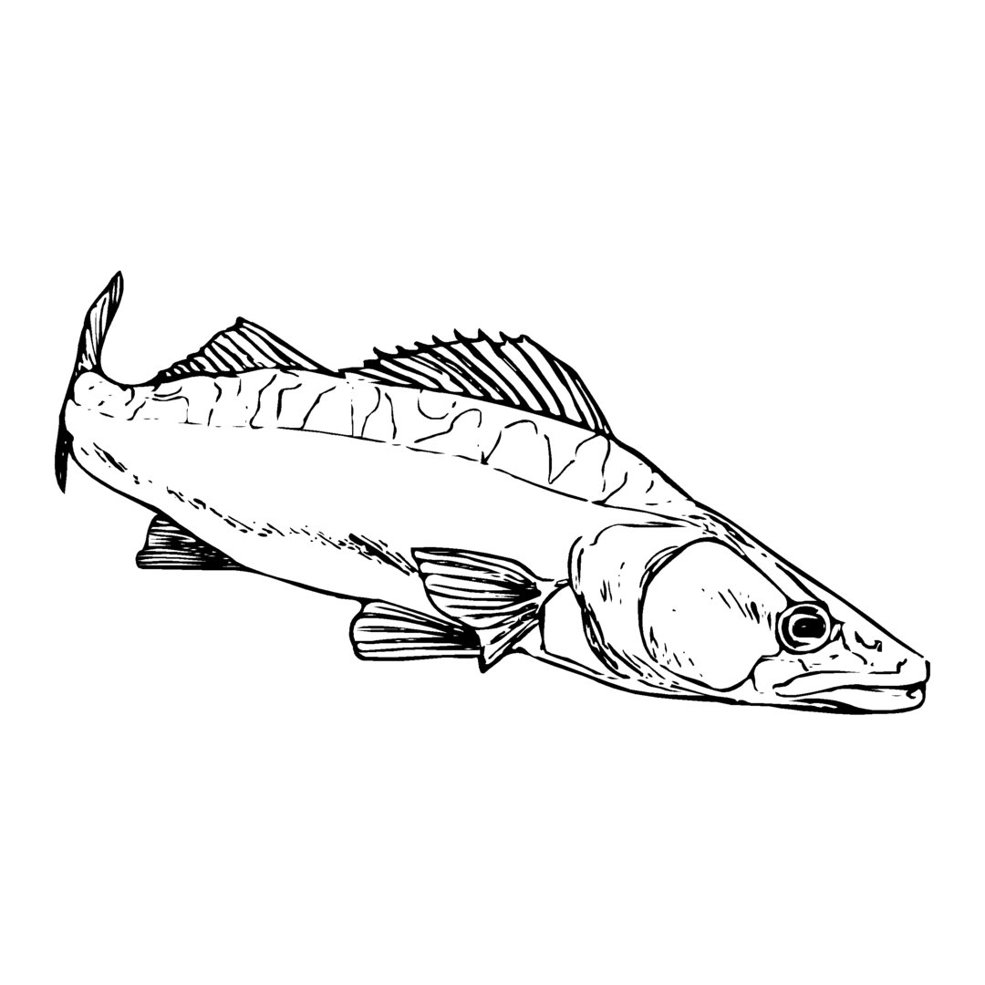 sticker SANDRE ref 30 bateau pêche autocollant poisson doré