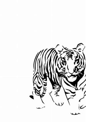 Tiger car sticker [MOD213] : Car stickers & Car graphics