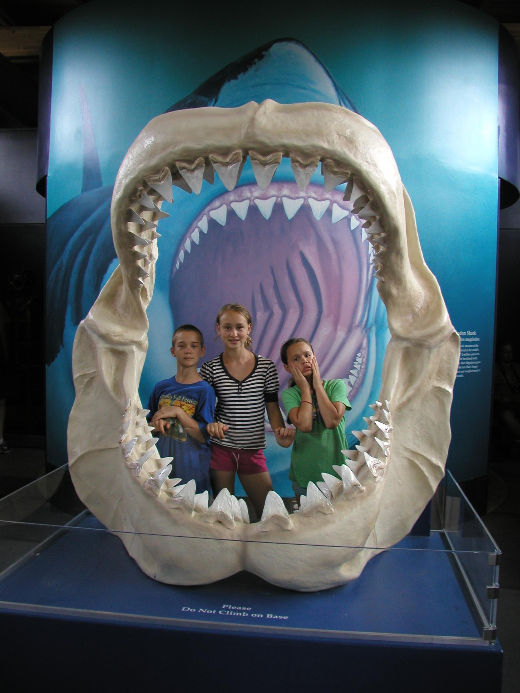 33_inside shark