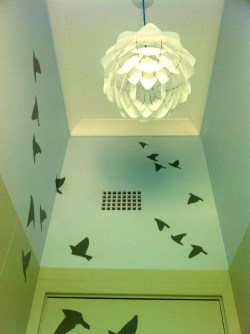 Client Photo - Flying Birds