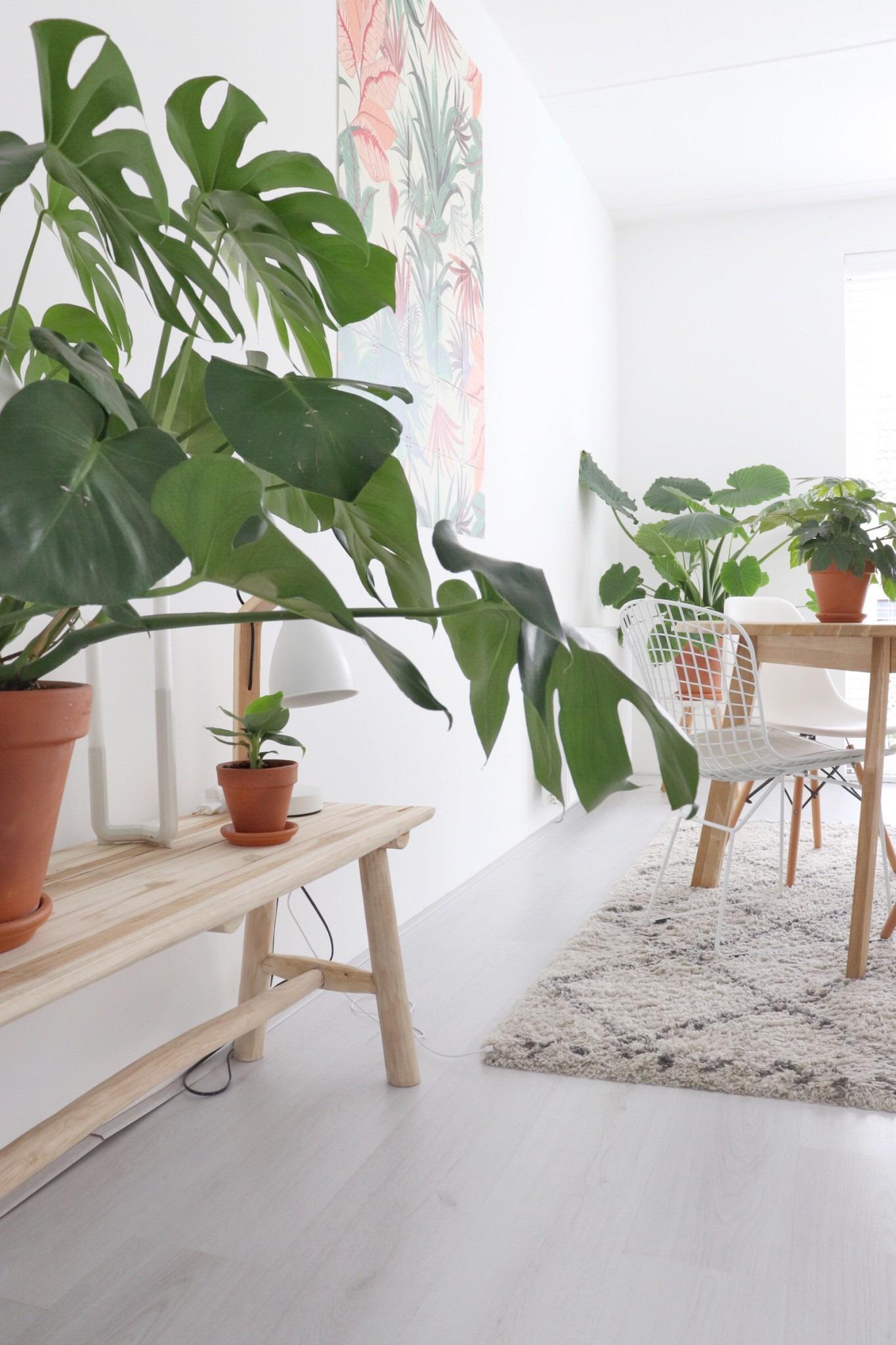Binnenkijken: de eettafel, IXXI en veel groene planten.