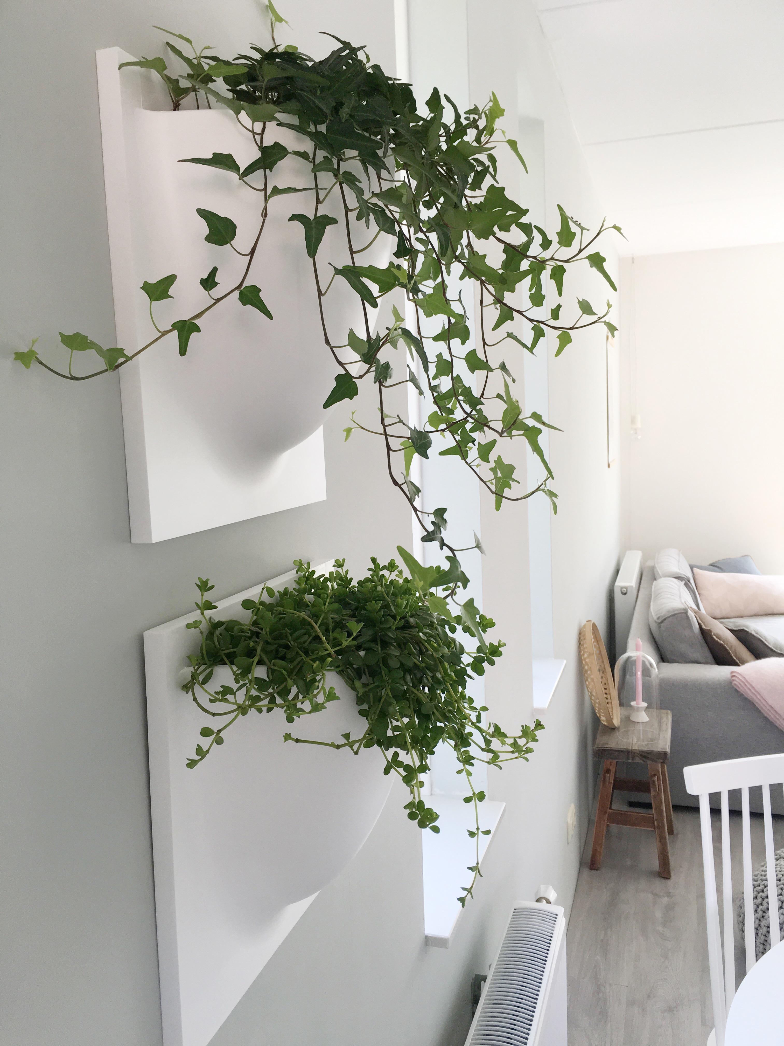 Een groene muur