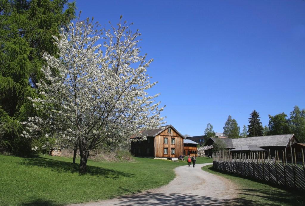 Museum Hamar Domkirkeodden
