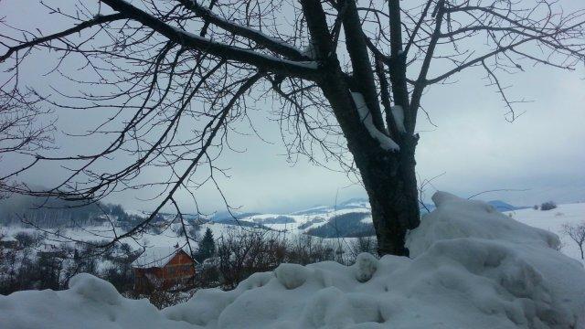 planina goc mountain goc