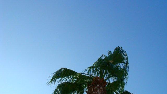 Palm tree / Palme