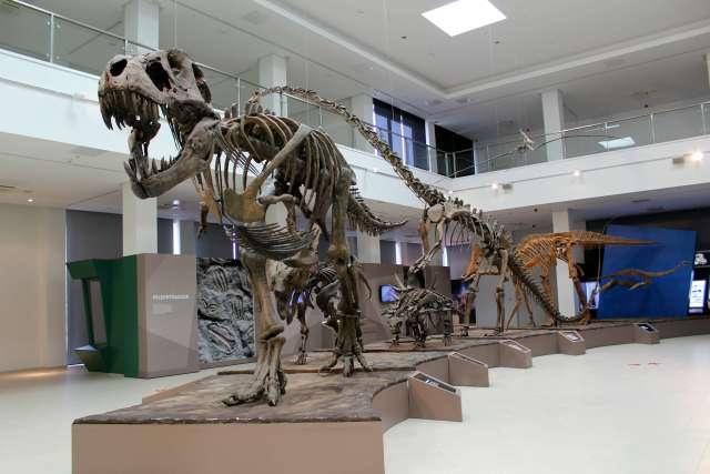 Skeleti dinosaurusa / The skeletons of dinosaurs